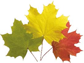 Klicke auf die Grafik für eine größere Ansicht  Name:autumn-leaves-20_207x204_64.png Hits:647 Größe:27,8 KB ID:81630