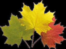 Klicke auf die Grafik für eine größere Ansicht  Name:autumn-leaves-20_png.png Hits:212 Größe:58,1 KB ID:81623
