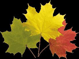 Klicke auf die Grafik für eine größere Ansicht  Name:autumn-leaves-20_PNGgoo&Gimp.png Hits:188 Größe:24,5 KB ID:81624