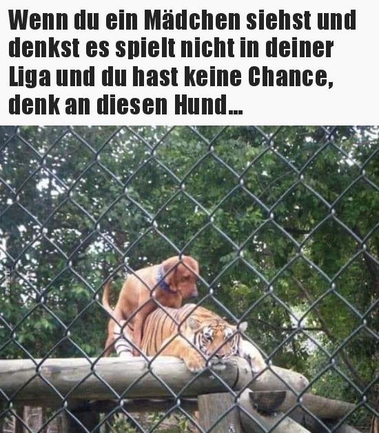 Denk an den Hund.jpg