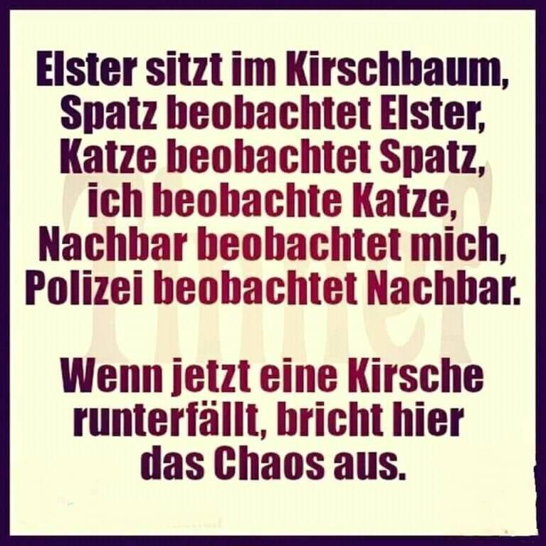 Elster_sitzt_im_Kirschbaum.jpg