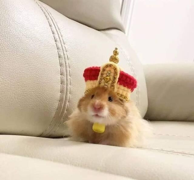 Hamsterkönig.jpg
