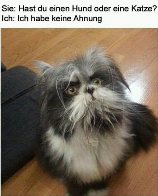 Haustier - Keine Ahnung.jpg