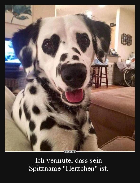 Hund - Herzchen.jpg