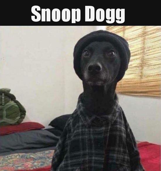 Hund - Snoop Dogg.jpg