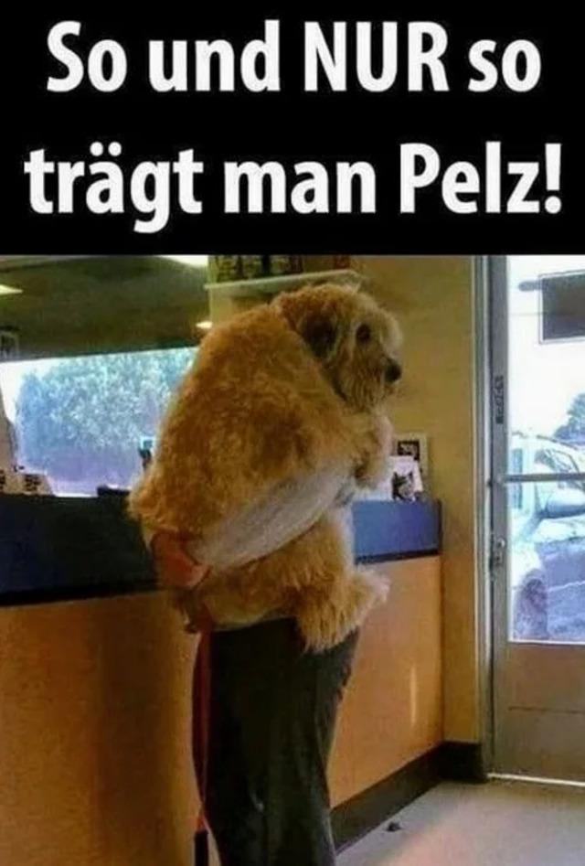 Hund - So wird Pelz getragen.jpg