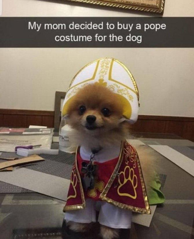 Hundepapst.jpg