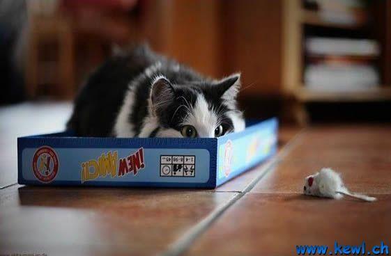 Klicke auf die Grafik für eine größere Ansicht  Name:Katz und Maus Spiel.jpg Hits:669 Größe:22,8 KB ID:64812