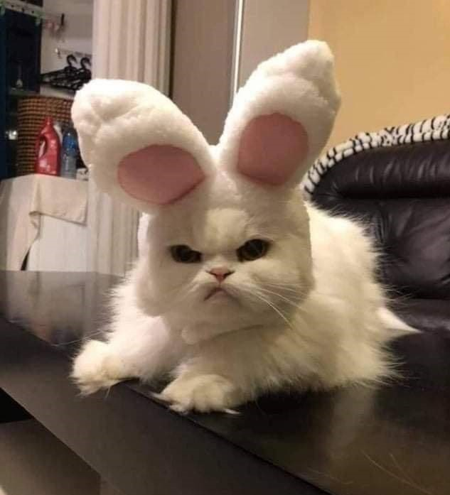 Katze - Osterkatze.jpg