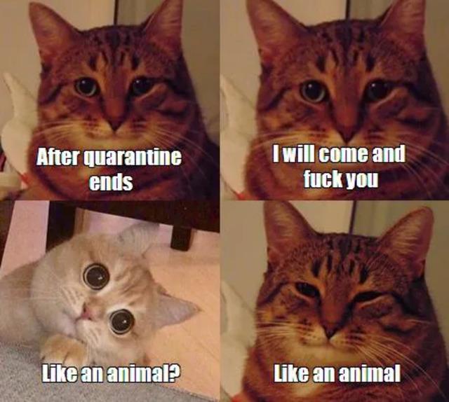 Katzen - like an animal.jpg