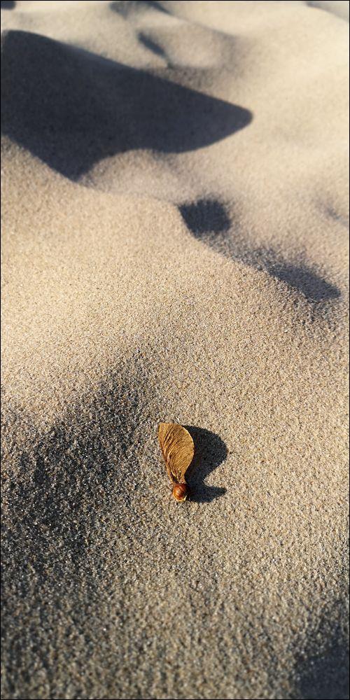 Klicke auf die Grafik für eine größere Ansicht  Name:Sandahorn.jpg Hits:23 Größe:154,6 KB ID:89211