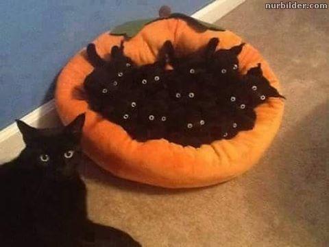 Schwarze Katzen - Nachwuchs.jpg