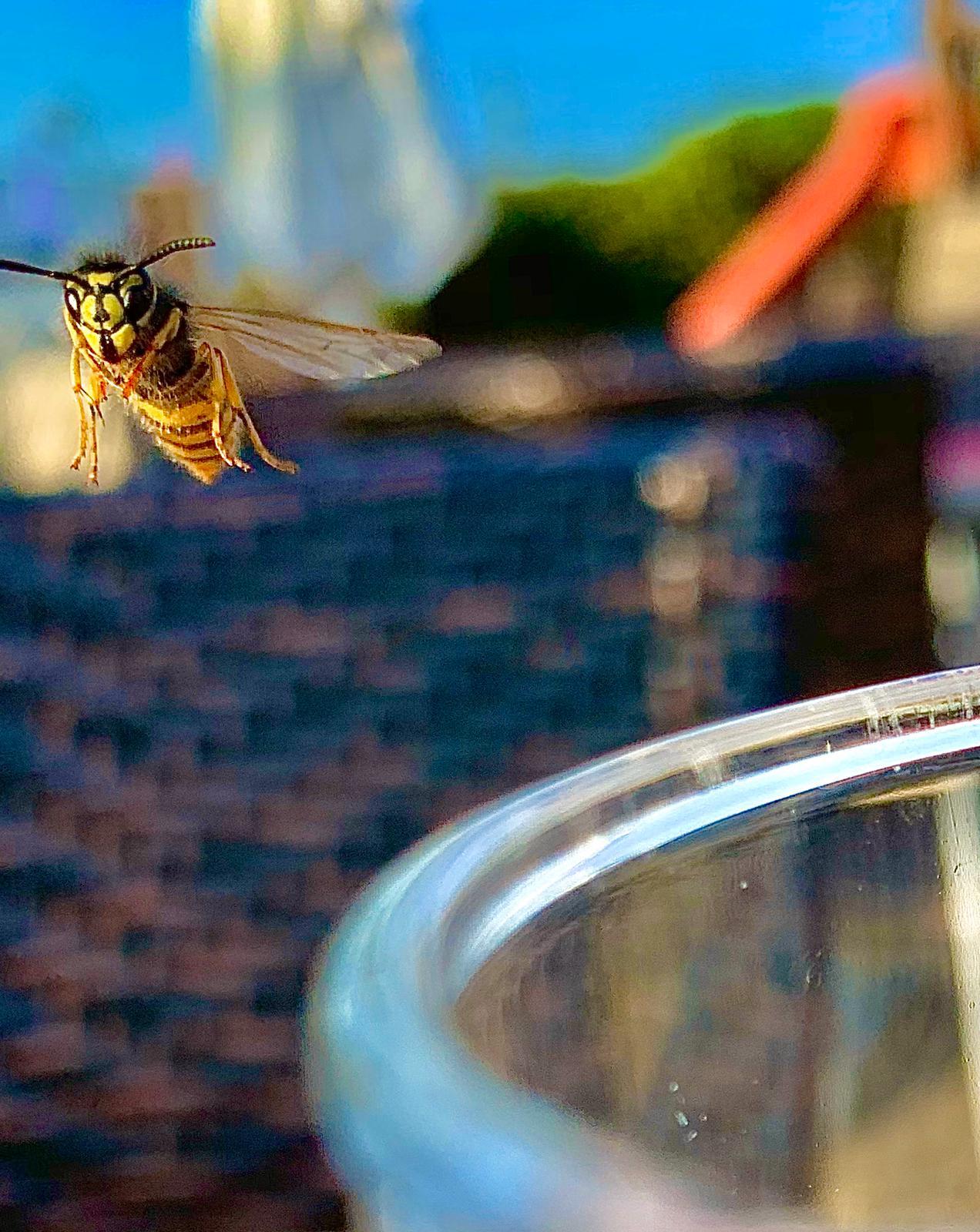 Klicke auf die Grafik für eine größere Ansicht  Name:Wasp ohne Antman.jpeg Hits:29 Größe:282,3 KB ID:89165