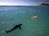 sharks15_1.jpg