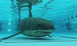 shark_in_pool.jpg